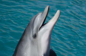 robo-delfiny